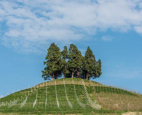 Wandern im Monferrato, Piemont