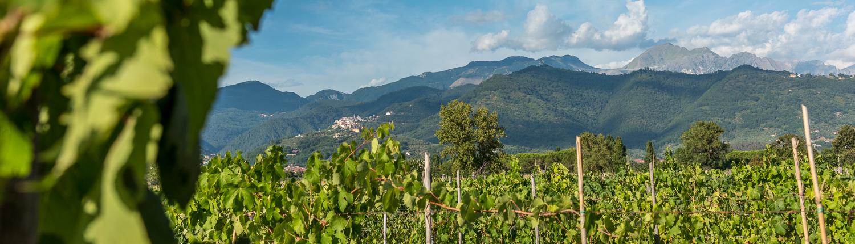 Die Marmorberge von Carrara von den Weinbergen bei Luni aus gesehen