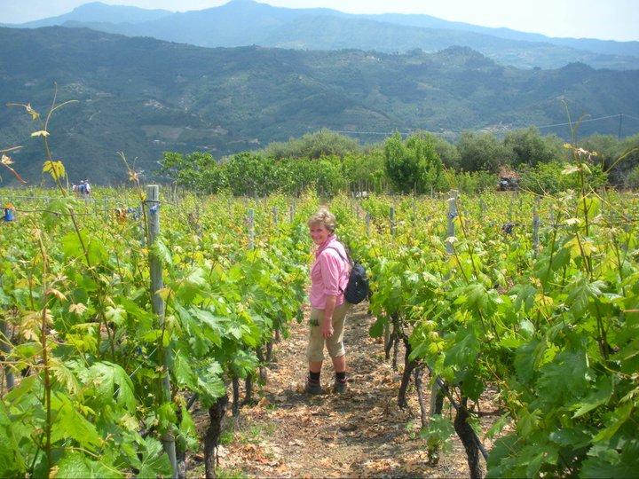 in den Weinbergen des Rossese Weines von Dolceacqua