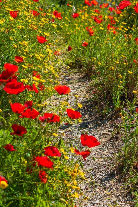 Wanderweg im Frühling in den Cinque Terre