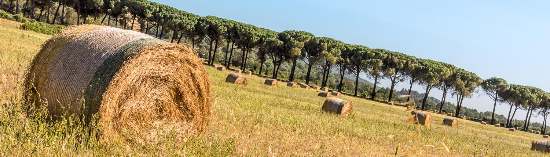 Die malerische Landschaft der Maremma, Pinienalleen, Kornfelder