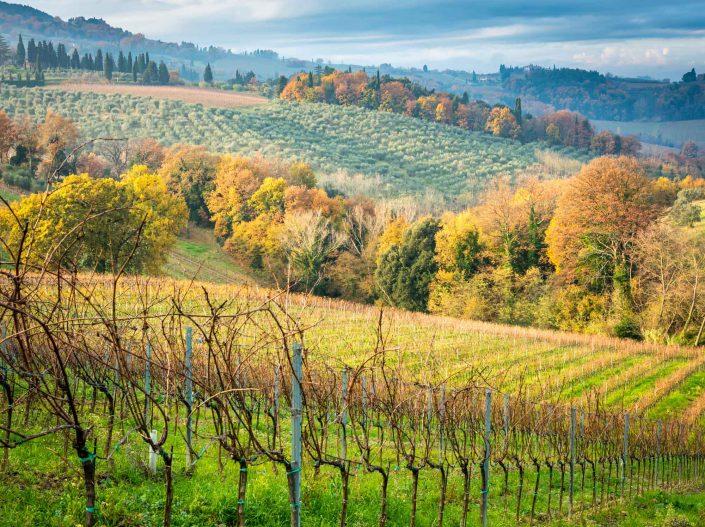 Wandern in den Weinbergen, Herbststimmung in der suedlichen Toskana