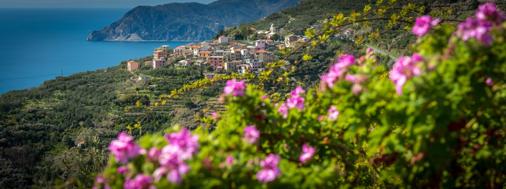 Volastra ein Dorf in den Cinque Terre