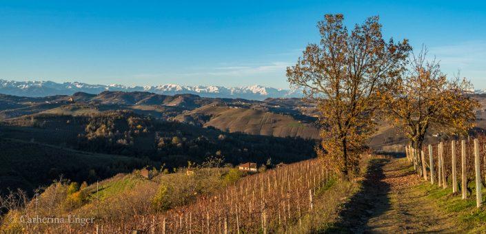 in den Hügeln der Langhe, Piemont