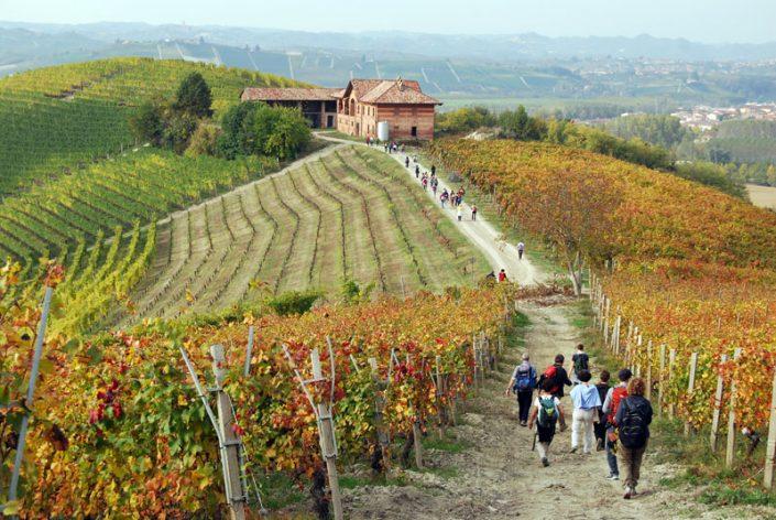 Wandern im Piemont, die Landschaft der Langhe mit Weinbergen und Ausblicken
