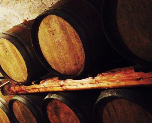 Barrique-Lager im biodynamischen Weingut am Gardasee: die Villa Calicantus