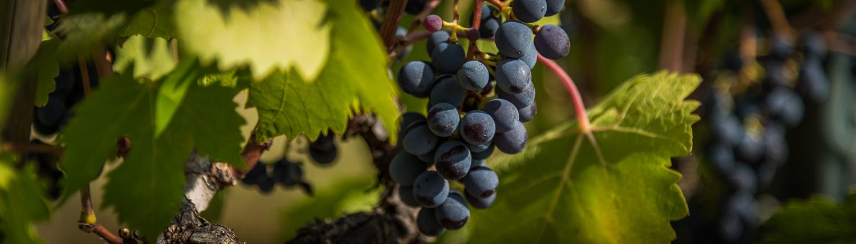 Weinreise in die Maremma mit Weinverkostungen
