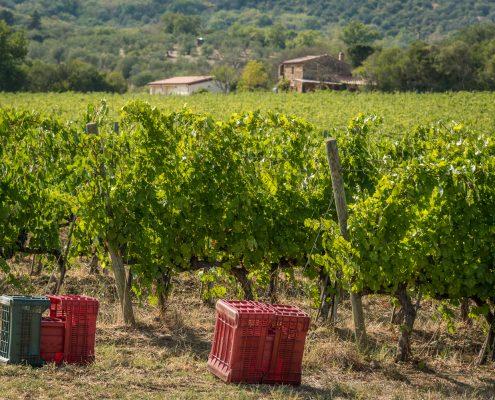 Weingut Vetluna in der Maremma bei Vetulonia