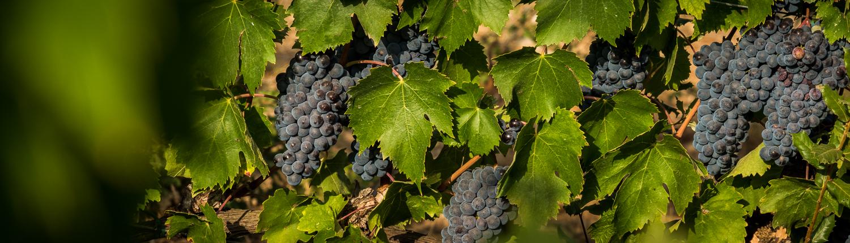 Weinreise in die Maremma, Toskana, Italien