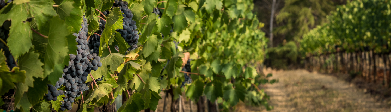 Weinreise in die Maremma, die Küste der Toskana