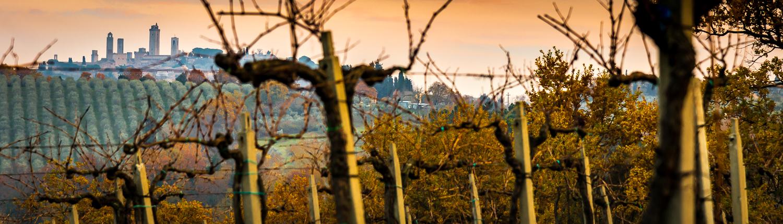 Weinberge bei San Gimignano