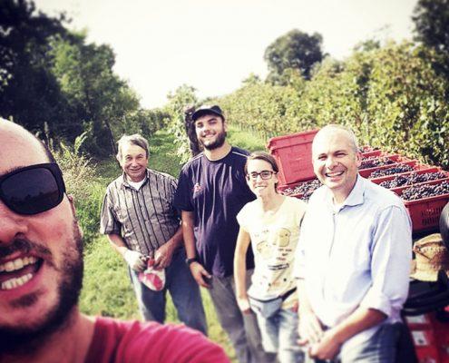 Veneto, Weinernte in der Villa Calicantus, biodynamische Weine