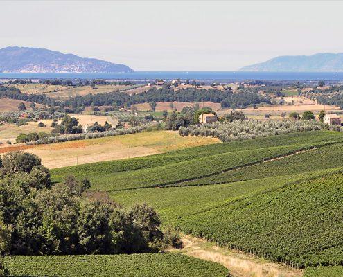 Blick vom Weingut La Selva in der Maremma bis ueber das Meer und zum Monte Argentario