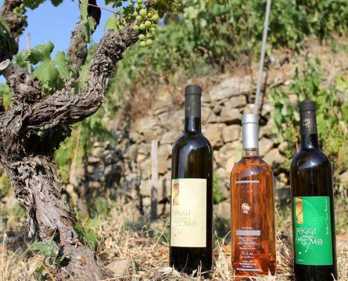 Wein von Poggi dell'Elmo in Westligurien