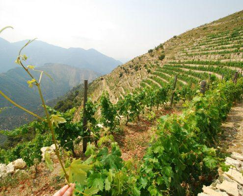 Westligurien Ausblick vom Weingut A Trincea