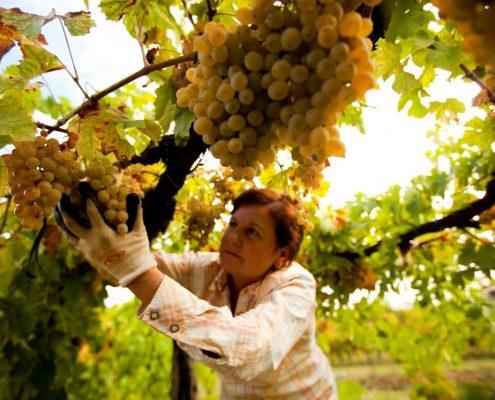 Weingut La Parrina bei Albinia in der Toskana