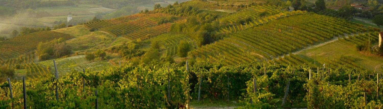Weinverkostung in der Cascina Gilli im Monferrato