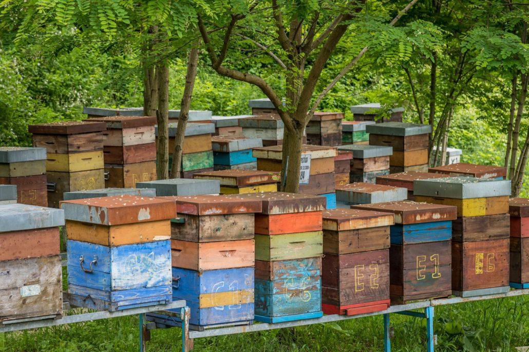 fleissige Honigbienen