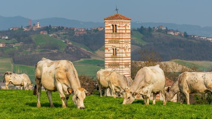 Razza Piemontese vor der romanischen Kirche