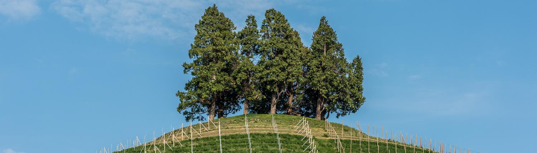 Wanderreise im Piemont, das Monferrato