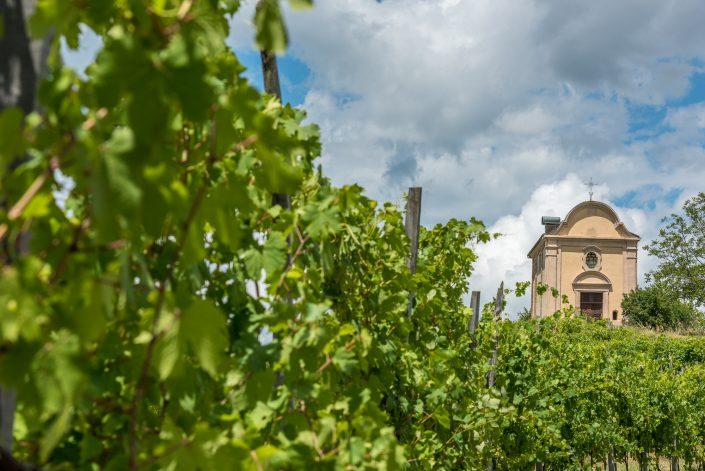 Wanderung durch die Weinberge in den Hügeln des Monferrato, Piemont