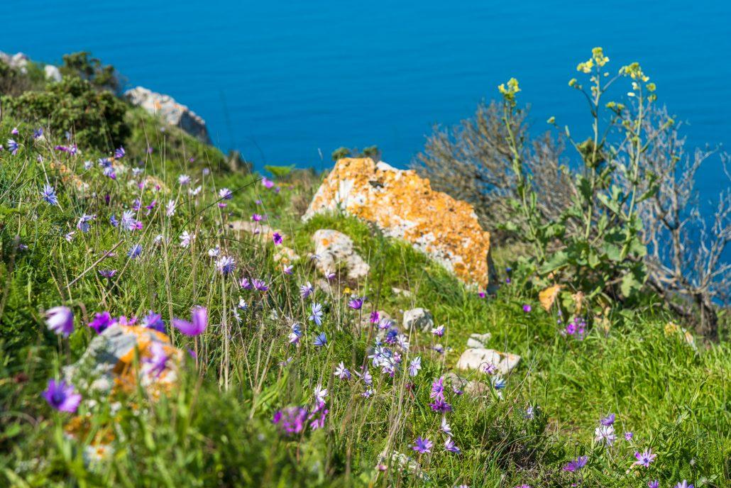 Wanderweg auf Capri