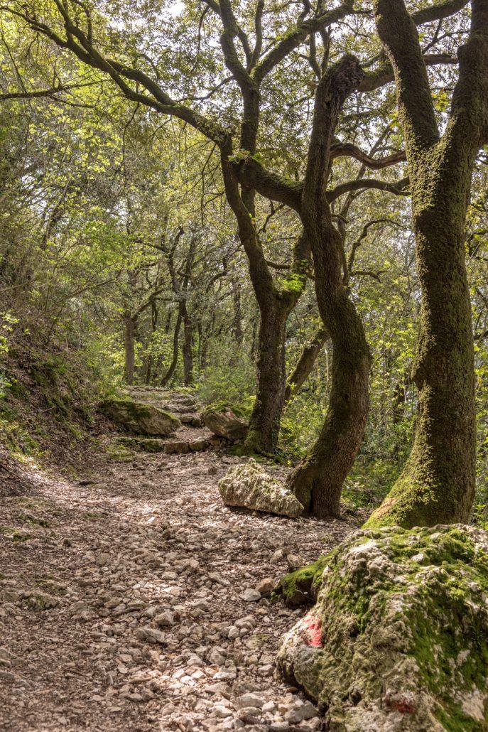Heiliger Wald