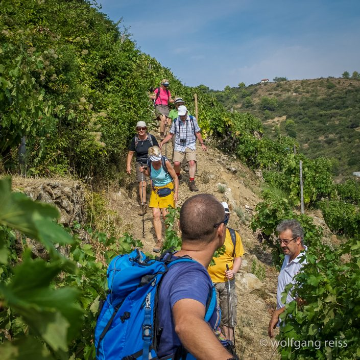 Bei Dolceacqua - Wandern in den Weinterrassen