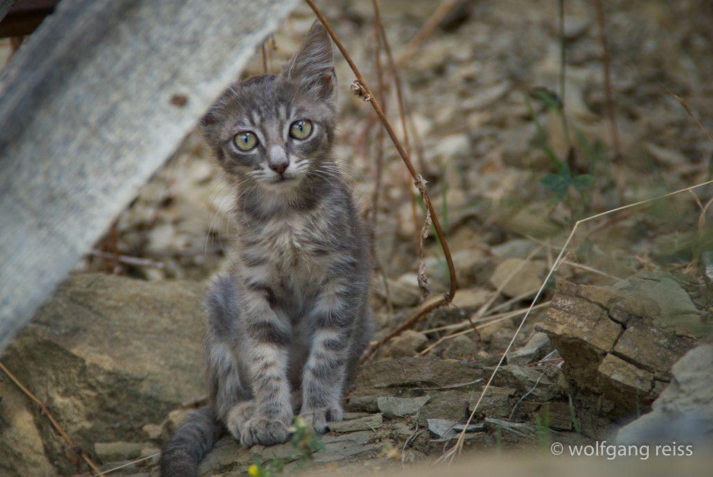 Katze in Westligurien