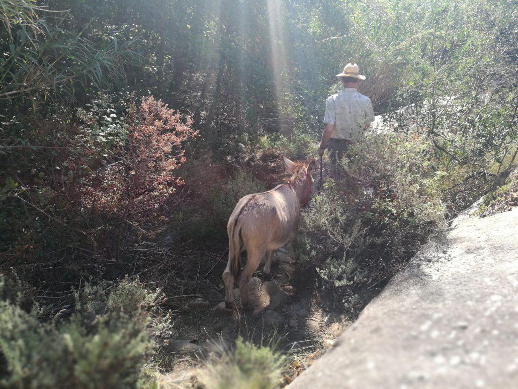 Eselwandern auf der Insel Elba in Italien
