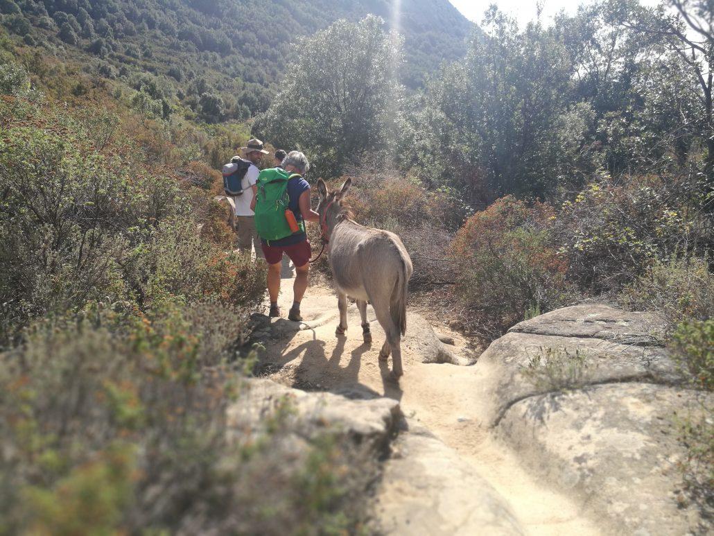 eselwandern bei pomonte auf der Insel Elba