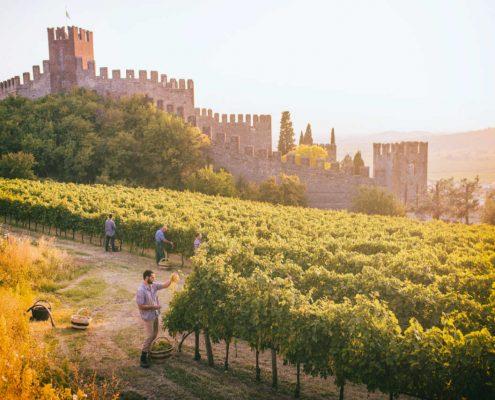 Weinanbau bei Soave