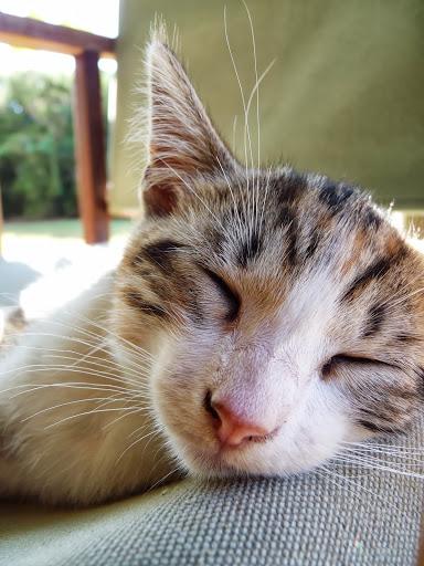 Katze in der Maremma