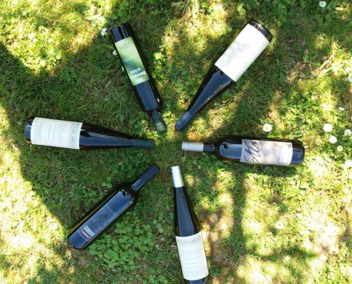 Weinverkostung Lambruschi