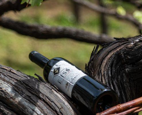 Weinverkostung an der Amalfikueste, Weingut San Francesco