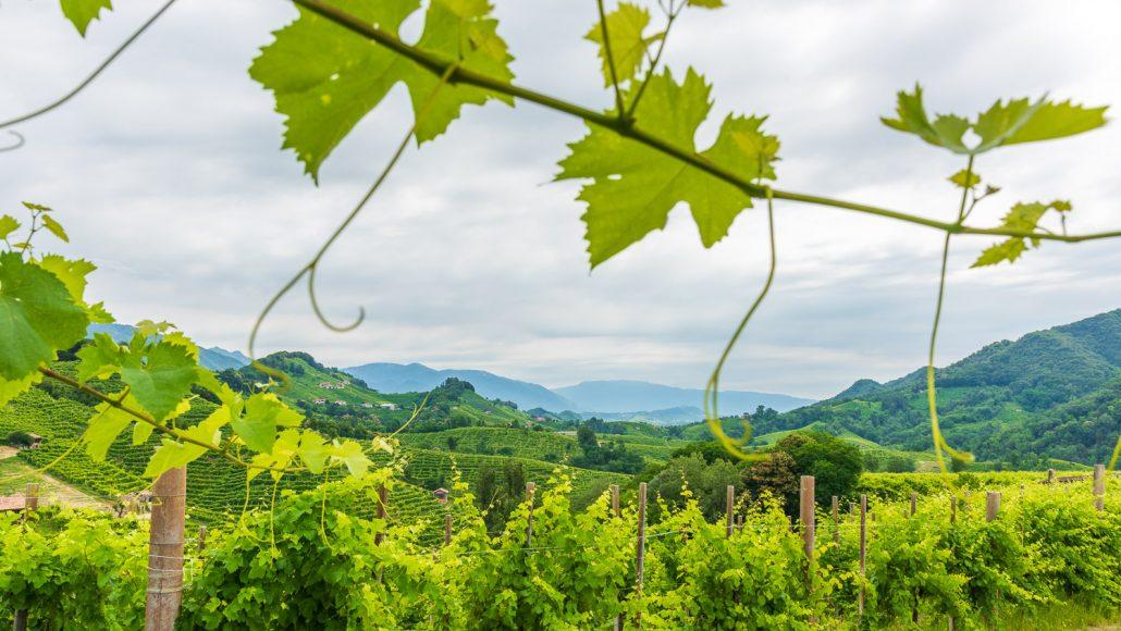 Landschaft im Proseccoland