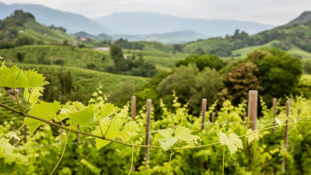 Landschaft Prosecco huegel