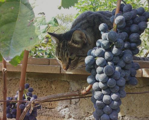 Weinverkostung in Subiaco